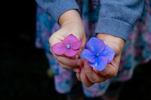 flowers-945450_640