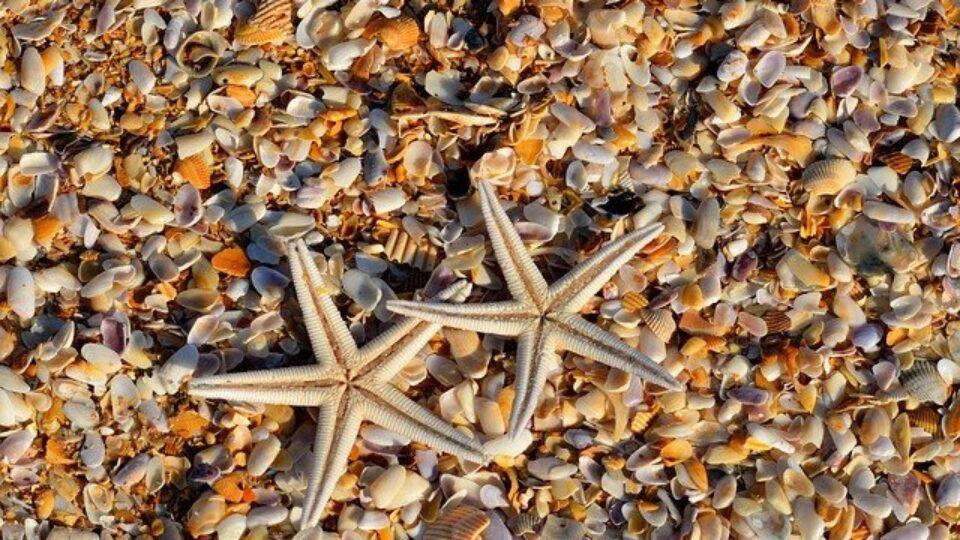 starfish-1572797_640